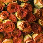 150 Orange Roses 60cm Long Stem