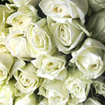 150 White Roses 60cm Long Stem