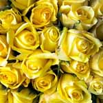 150 Yellow Roses 60cm Long Stem